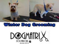 Dogmatrix Dog Parlour