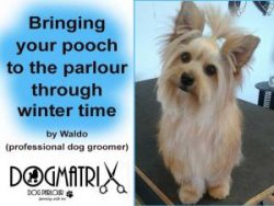 Winter Dog Grooming in Mossel Bay